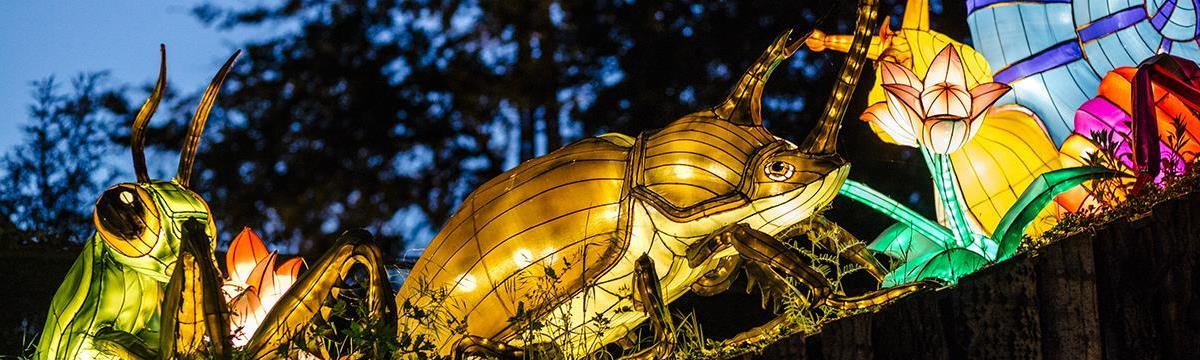 Esti színorgia a budapesti állatkertben – Látogassatok el a Sárkányok éjszakáira!