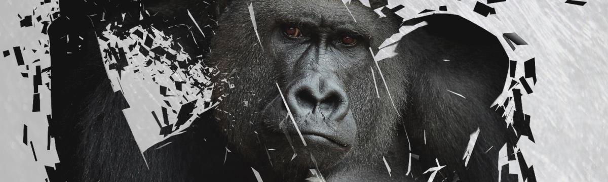 Tényleg meg kellett ölni a gorillát, aki a kisfiúval játszott?