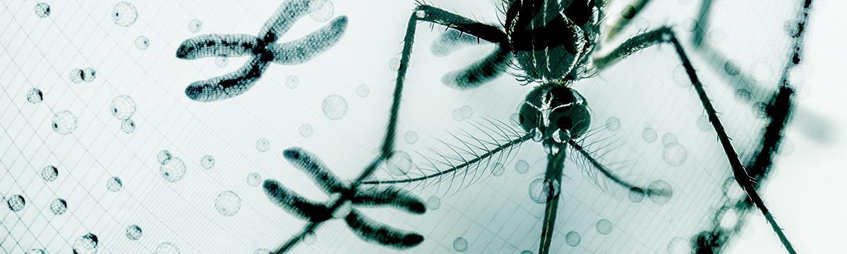 Zaklat a zika – Járványok, amiktől folyamatosan rettegünk, pedig lehet, nem kéne?