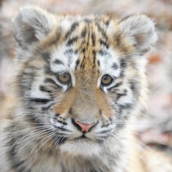 A Nyíregyházi Állatpark lett Európa legjobb állatkertje