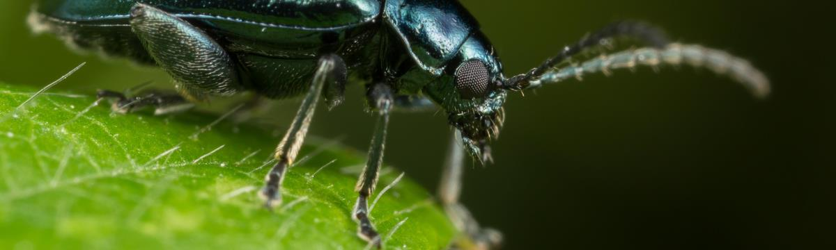 Aki a bogarakat szereti, rossz ember nem lehet!