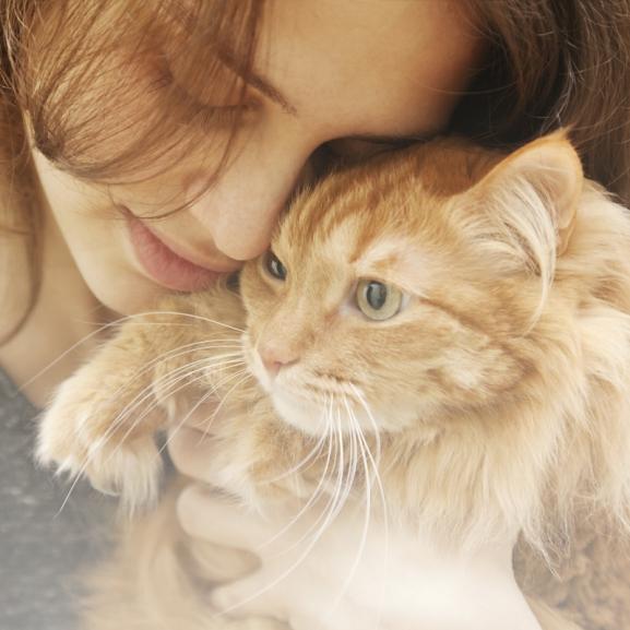 """""""Mikor adsz már enni?!"""" – erre gondolnak a macskák, mikor ölelgetitek őket"""