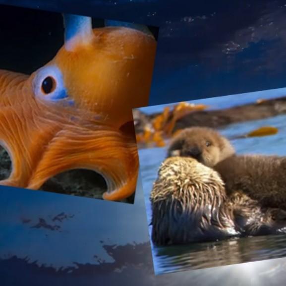 """""""A hullámok alatt olyan teremtmények rejtőznek, amiket el sem tudunk képzelni"""" - vigyázzunk rájuk!"""