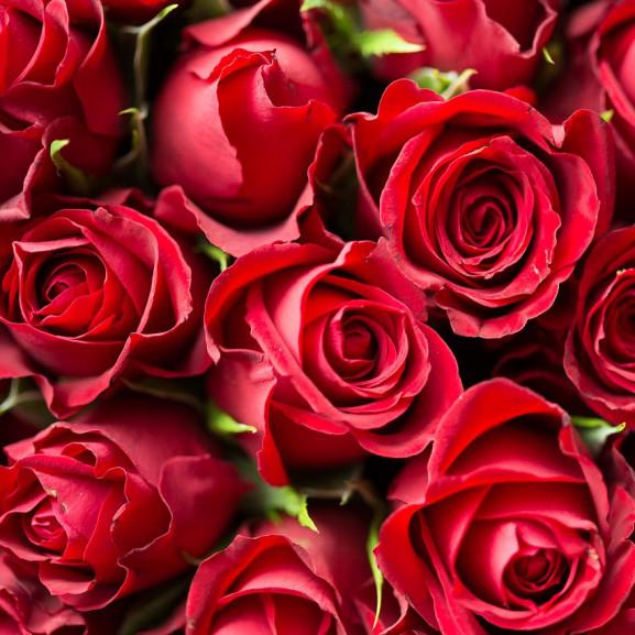A szerelem rózsái