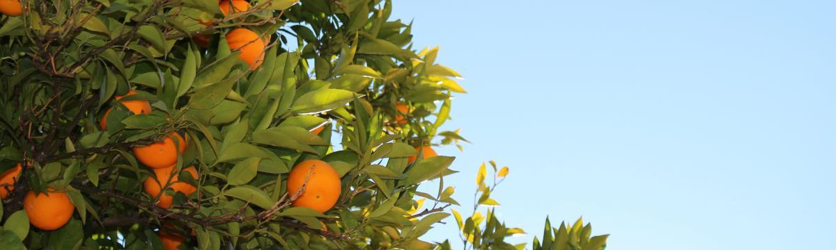 Csodás narancs az egészségetekért – Még idén! kampány
