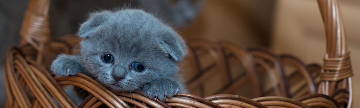 adorable-1845789_1920