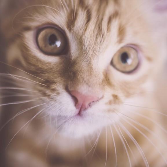 állat cica macska