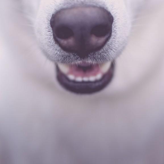 állat kutya