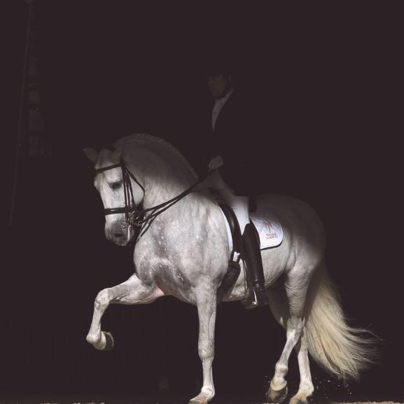 Ismerjétek meg a világ legelegánsabb lovait, amelyek most egy helyre gyűltek össze