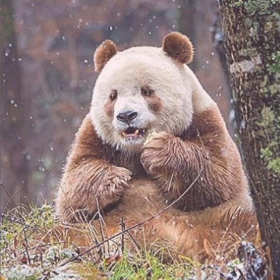 barna-pandamaci-qizai-medve