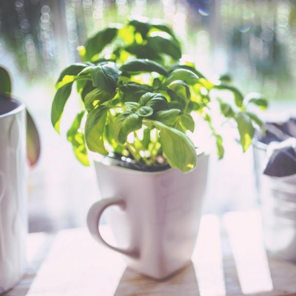 5 fűszer, amiről nem is gondolnátok, hogy egyben gyógynövény is!