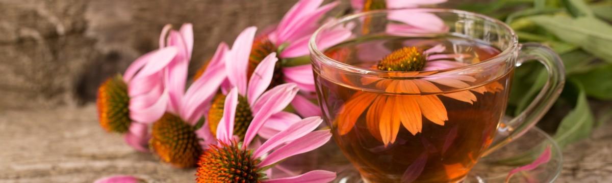 Bíbor kasvirág echinacea