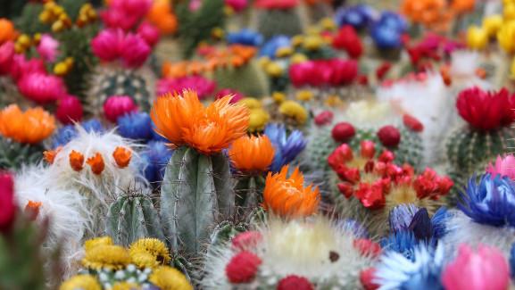 cactus-2721269_1920