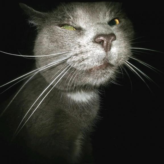 cat-2579323_1920