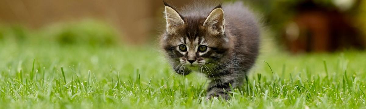 cat-4419763_1920