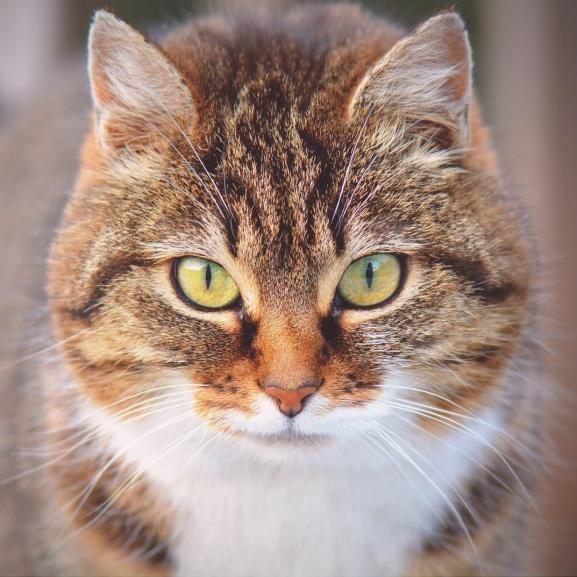 Rossz hír a macskásoknak: öngyilkos gondolataink támadhatnak a cicák miatt