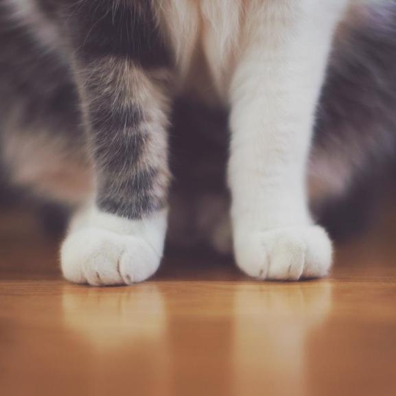 Nagyon cuki tény derült ki a macskák legidegesítőbb szokásáról