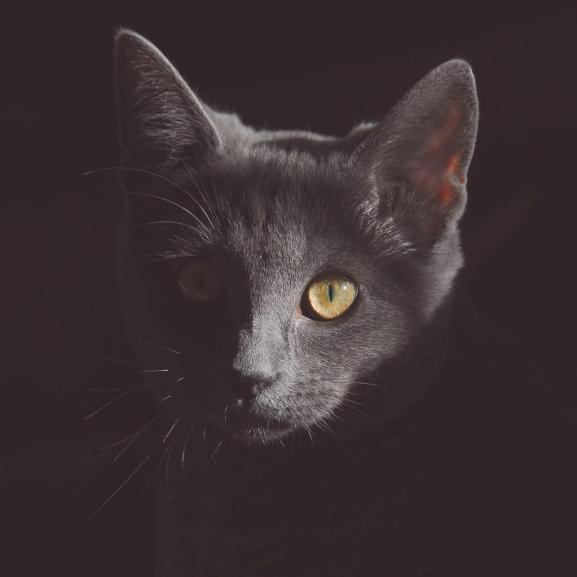Cicákkal még a horrorfilmeket is meg lehet szeretni