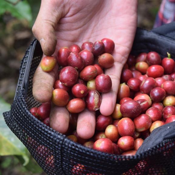 coffee-3408135_1920