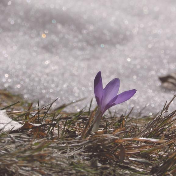 Idén is hóesésben ünneplünk március 15-én