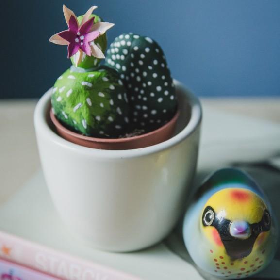 diy kaktusz Mojzes Nóra