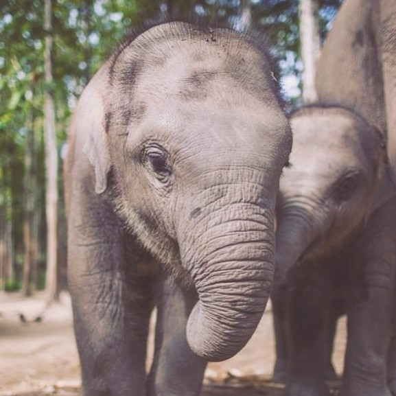 elefant-kolyok-szafari