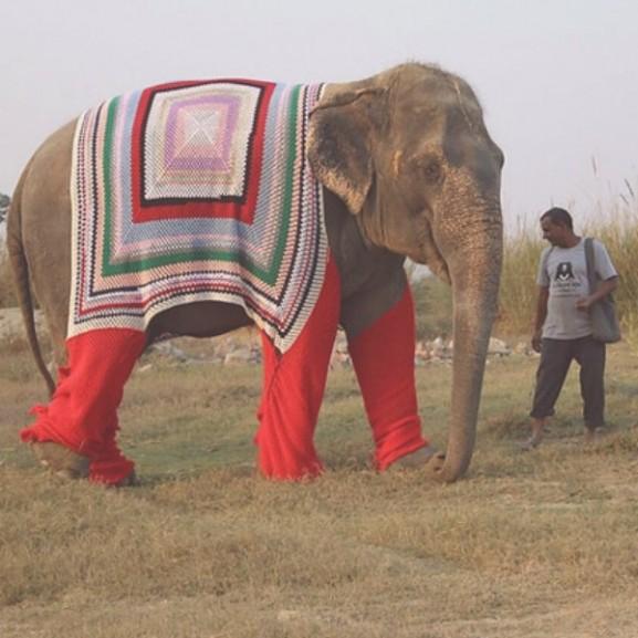elefánt pulóver gondozási központ