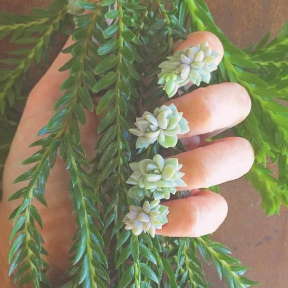 élő virág manikűr