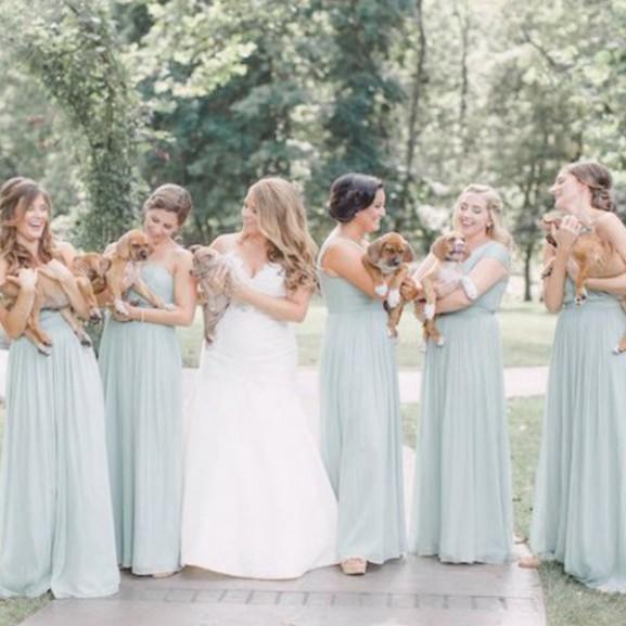 esküvő kiskutya