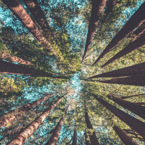 fa erdő természet