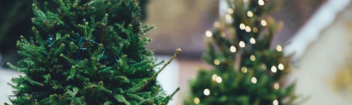 fa fenyő karácsonyfa