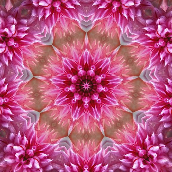 flower-1543895_1920 (1)