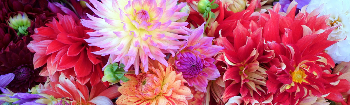 flowers-937628_1920
