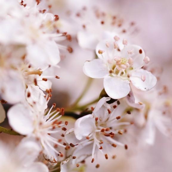 Egy férfi több ezer virágot ültetett, hogy vak feleségét mosolyogni láthassa