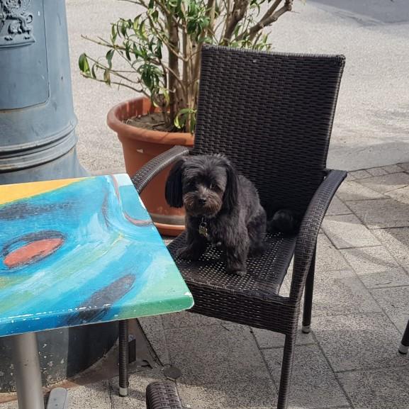Frappé a székben asztal mellett