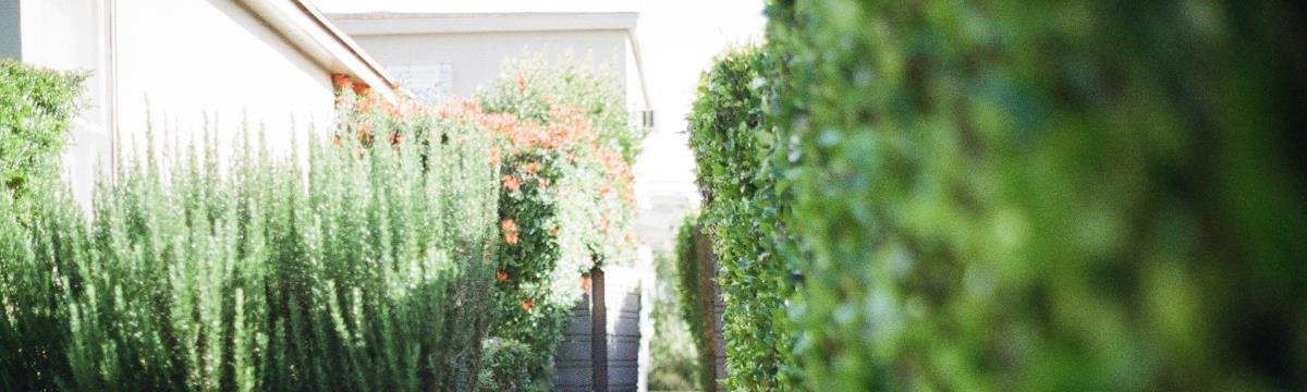Néhány egyszerű trükkel meseszép kertet csinálhattok ti is
