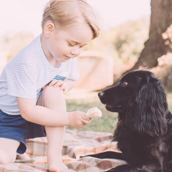 györgy herceg fagyi kutya