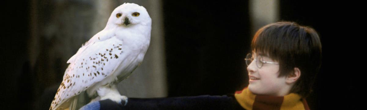 J. K. Rowling Teszlek süveg-tesztjéből végre kiderül, melyik házba kerülnénk