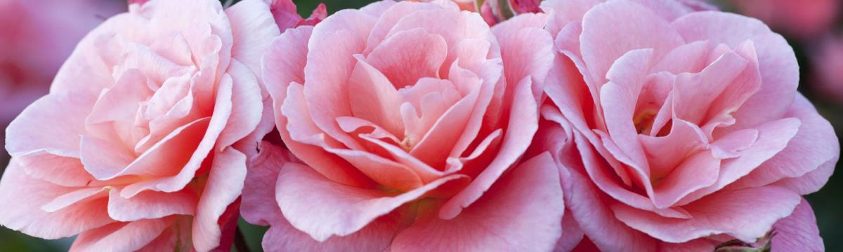 Megható: egy cég betegeknek ajándékozza az esküvőkről megmaradt virágokat