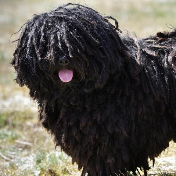 Nyüzsgők vagy inkább megfontoltak vagytok? Teszteljétek, melyik magyar kutyafajta illik hozzátok!