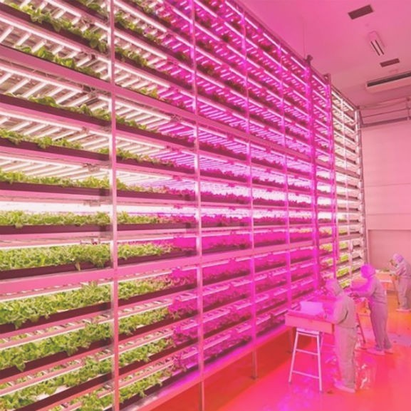 japán növénytermesztés