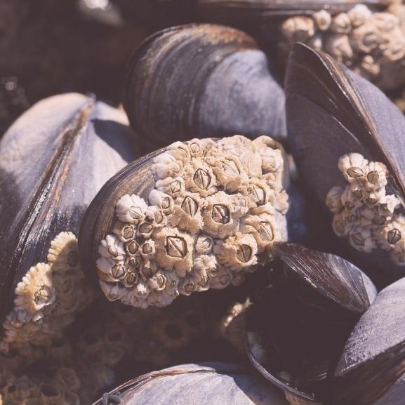 Kiderült, hogy tényleg a tenger zaját halljuk-e a kagylókban