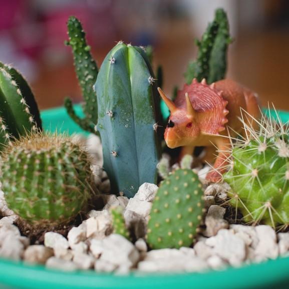 kaktusz tál diy dinoszaurusz