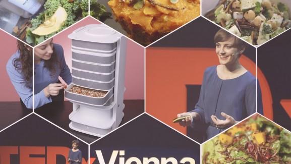 Katharina Unger ehető rovar keltető livinfarms
