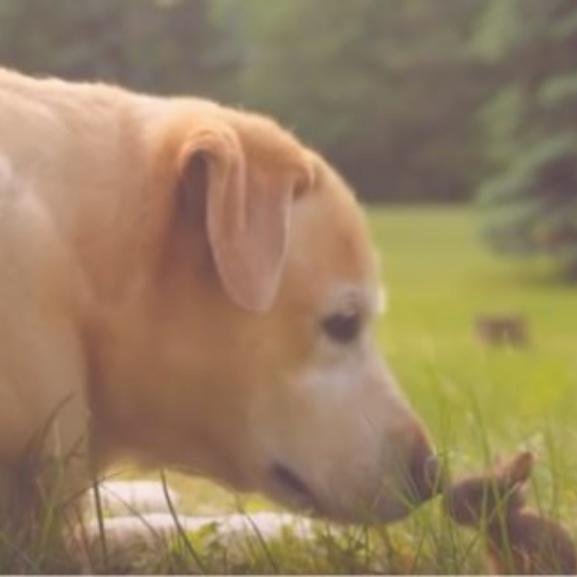 Ilyen cukit még nem látott a világ: egy kutya vigyáz a kisnyuszira!