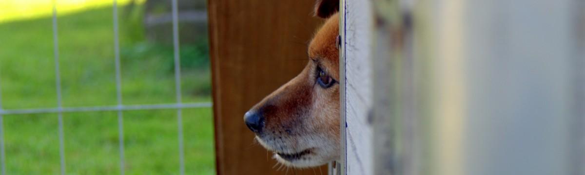 kutya-allatmenhely-bezartsag