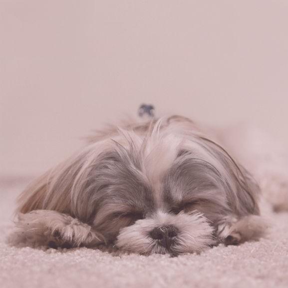 kutya alvás