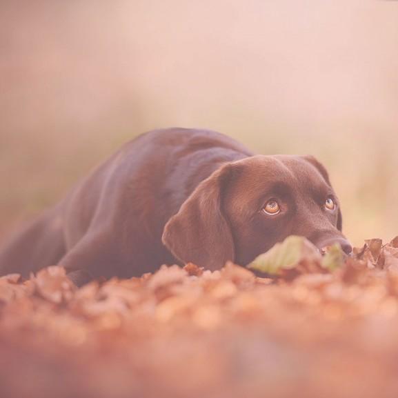 kutya ősz