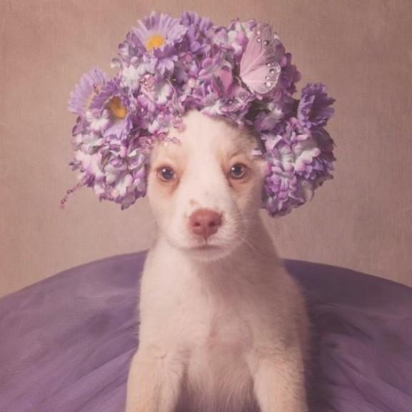 kutya virág koszorú
