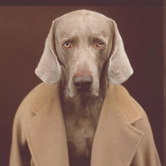 Kutyákra cserélte kabátmodelljeit a Max Mara